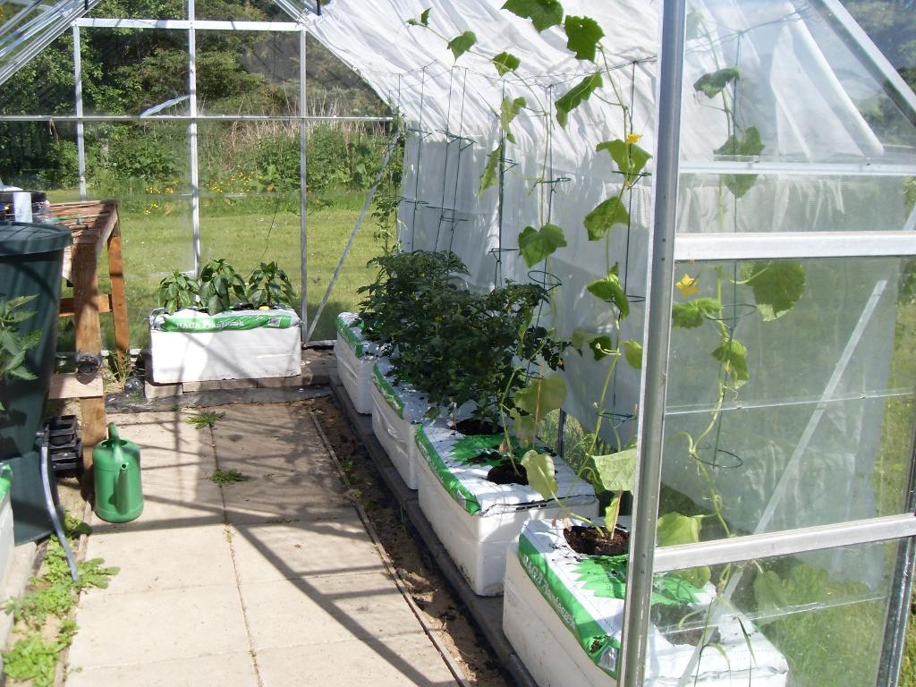 hvad dyrker man i et drivhus